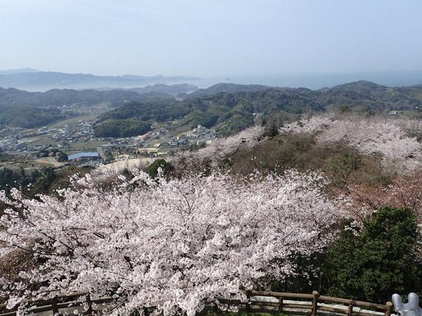 海山城展望台からの眺めと桜