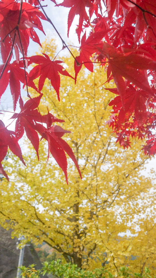 内子町の紅葉