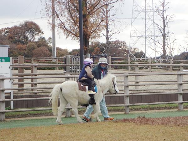 野間馬ハイランドの乗馬体験