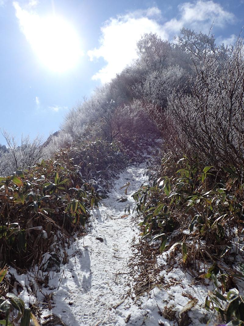 伊予富士の雪道